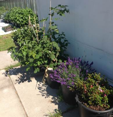 grote tuin geheel plaagvrij