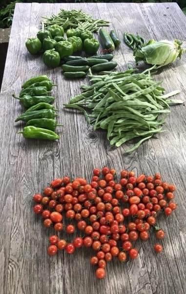 oogst diverse groenten
