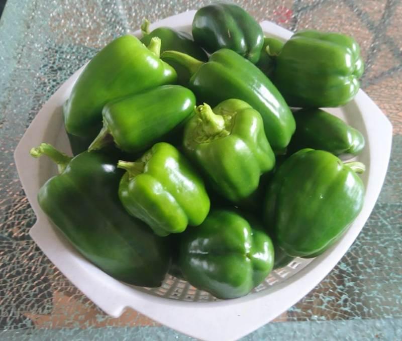 groene pepers oogst